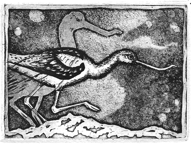 Avocet copperplate etching by Elizabeth Dewitte