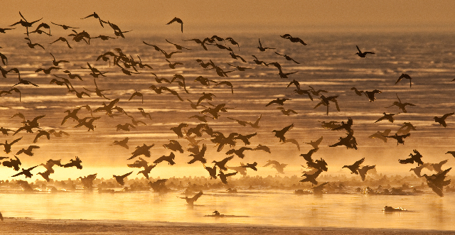 Antelope Island 5 by Gary Crandall
