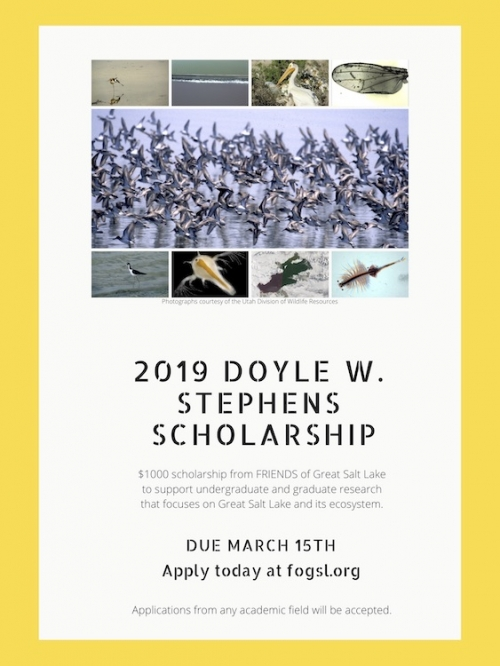 Doyle W. Stephens Scholarship Applications Now Open